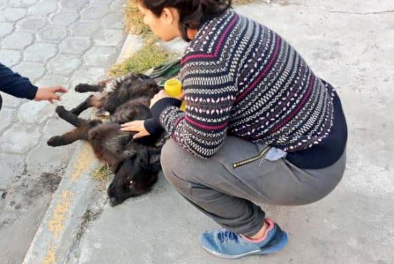 Resultado de imagen para mueren animales envenenados en ecuador