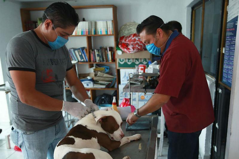 Naucalpan ve por dignidad de mascotas. Noticias en tiempo real