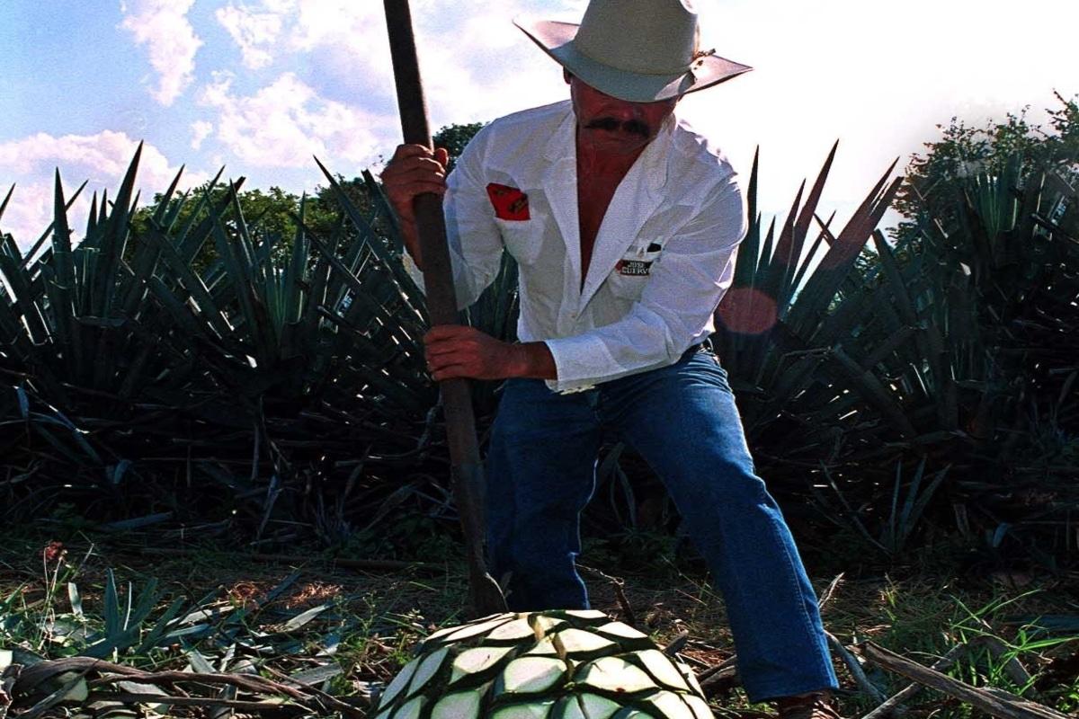 Tequila, primer Destino Turístico Inteligente. Noticias en tiempo real